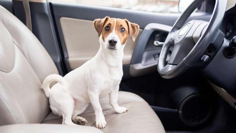 taxi avec chien a perpignan